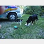 Also hier in Griechenland fressen einem die Hunde alles weg