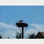 28 - ein Storch und sein Junges