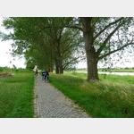11 - Elberadweg nördlich von Riesa, stromaufwärts, linksseitig