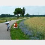 20 - Kornblumen bei Weßnig am Elberadweg