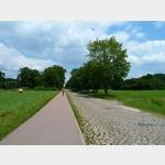 18 - Zufahrtsstraße von Wörlitz zur Fähre Coswig über die Elbe