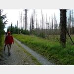 12 - von Borkenkäfern heimgesuchtes Waldstück im Harz auf dem Weg zum Brocken