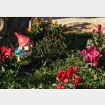 Unser Gartenzwerg...und das in Spanien  (Calpe, Dez.2011)